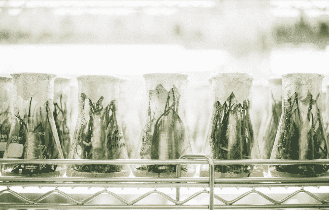 jardin labo phytoextraction